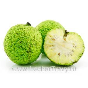 Маклюра (Адамово яблоко), (1 плод)