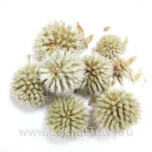 Мордовник шароголовый (семена) (50г)
