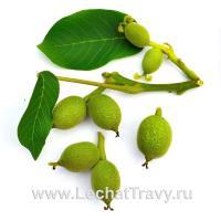 Зелёные грецкие орехи (10шт)